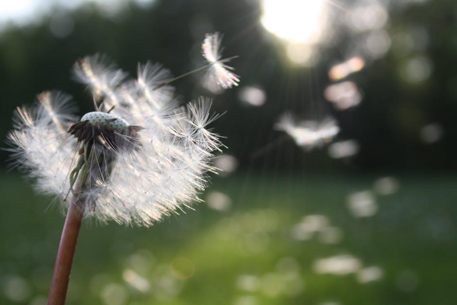 Как да различаваме желания от необходимости?